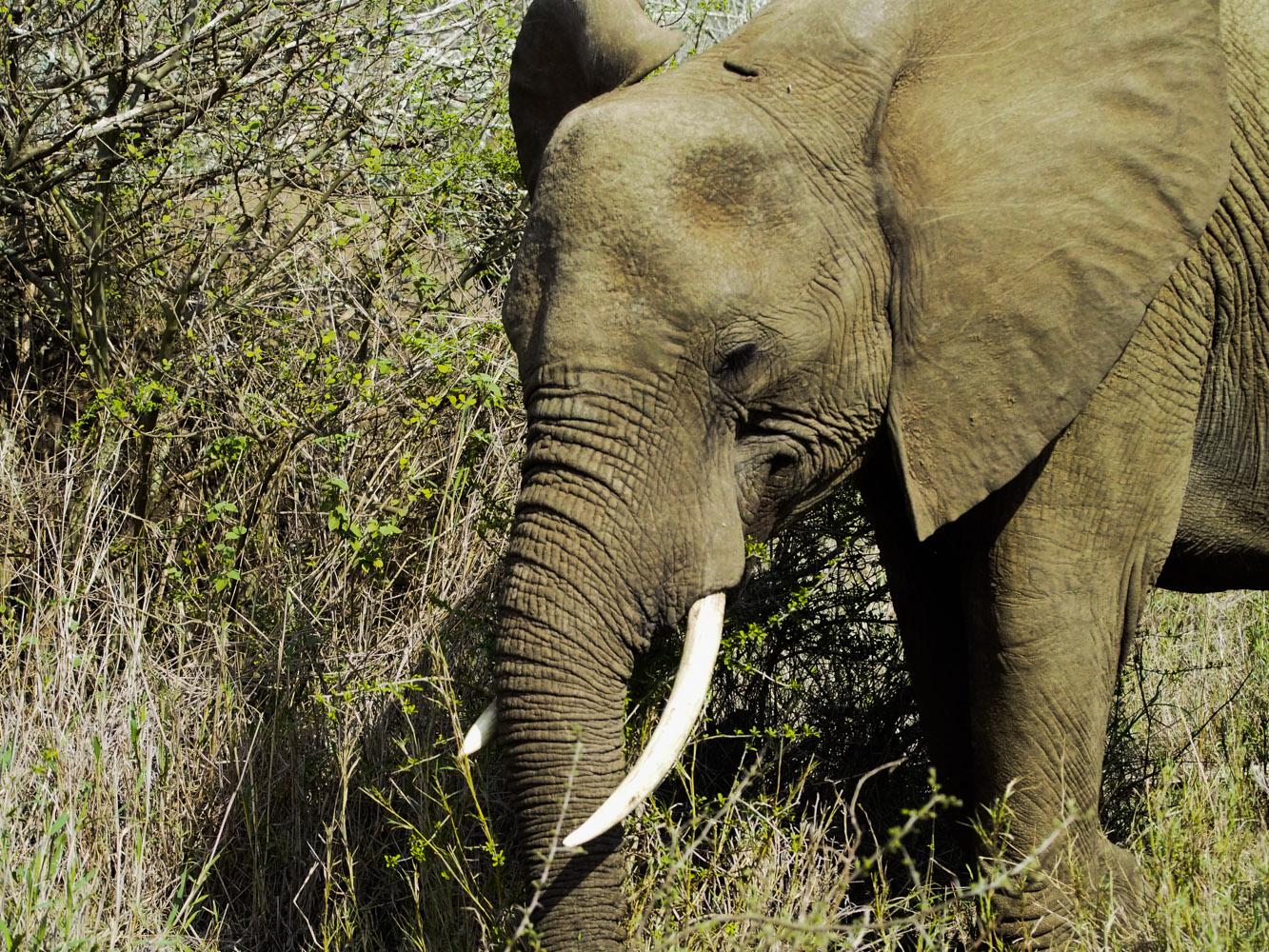 Südafrika_Southafrica_Kruger_Krüger_Nationalpark-16