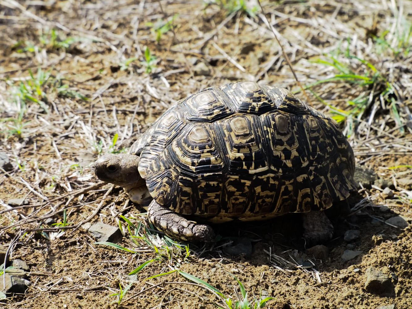 Südafrika_Southafrica_Kruger_Krüger_Nationalpark-18