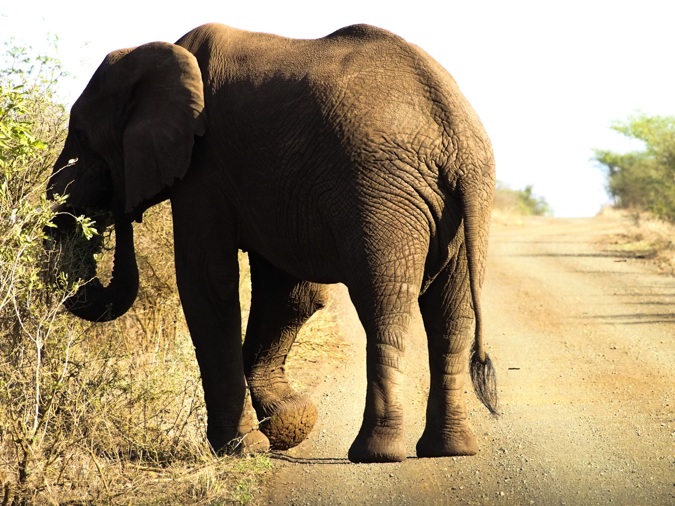 Südafrika_Southafrica_Kruger_Krüger_Nationalpark-36