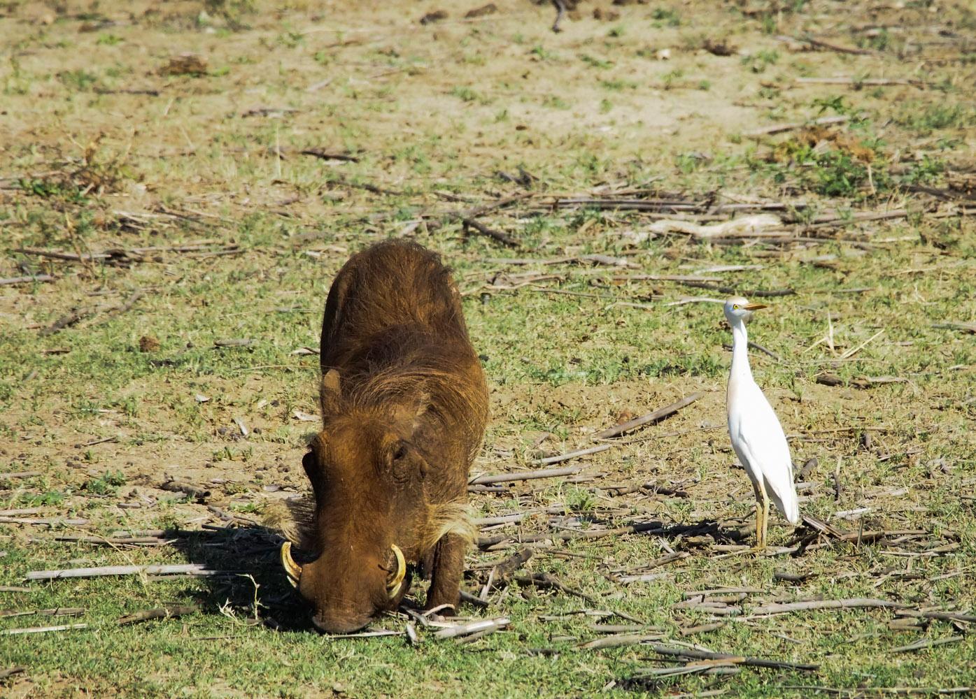 Südafrika_Southafrica_Kruger_Krüger_Nationalpark-37