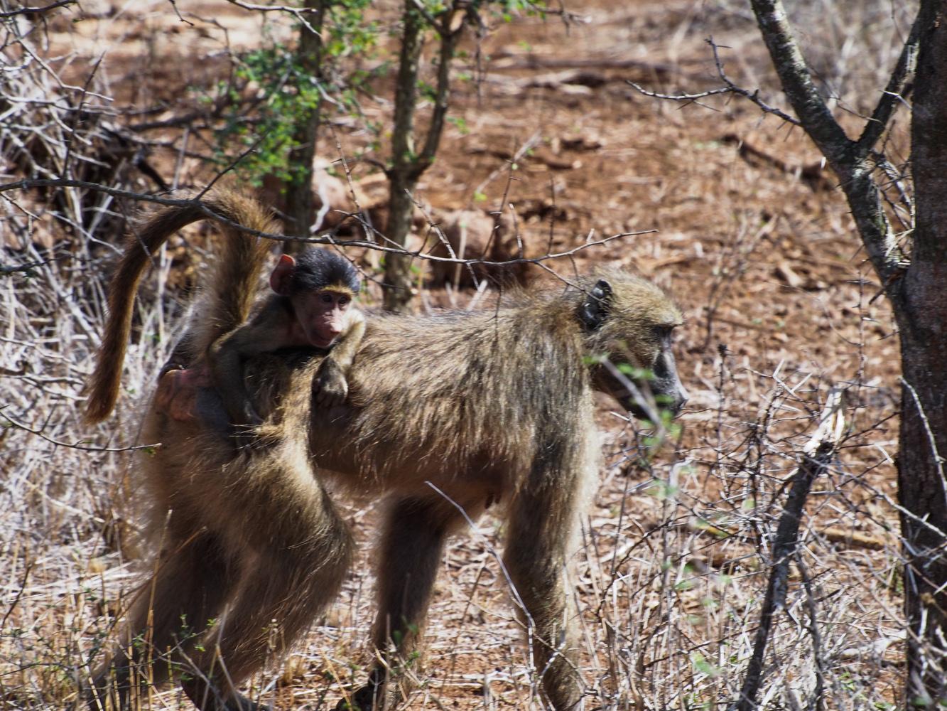 Südafrika_Southafrica_Kruger_Krüger_Nationalpark-42