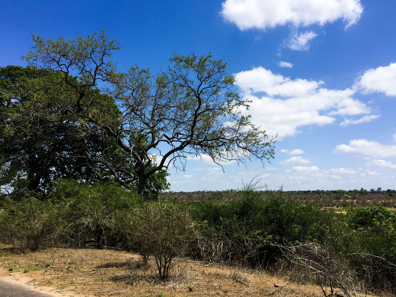 Südafrika_Southafrica_Kruger_Krüger_Nationalpark-52
