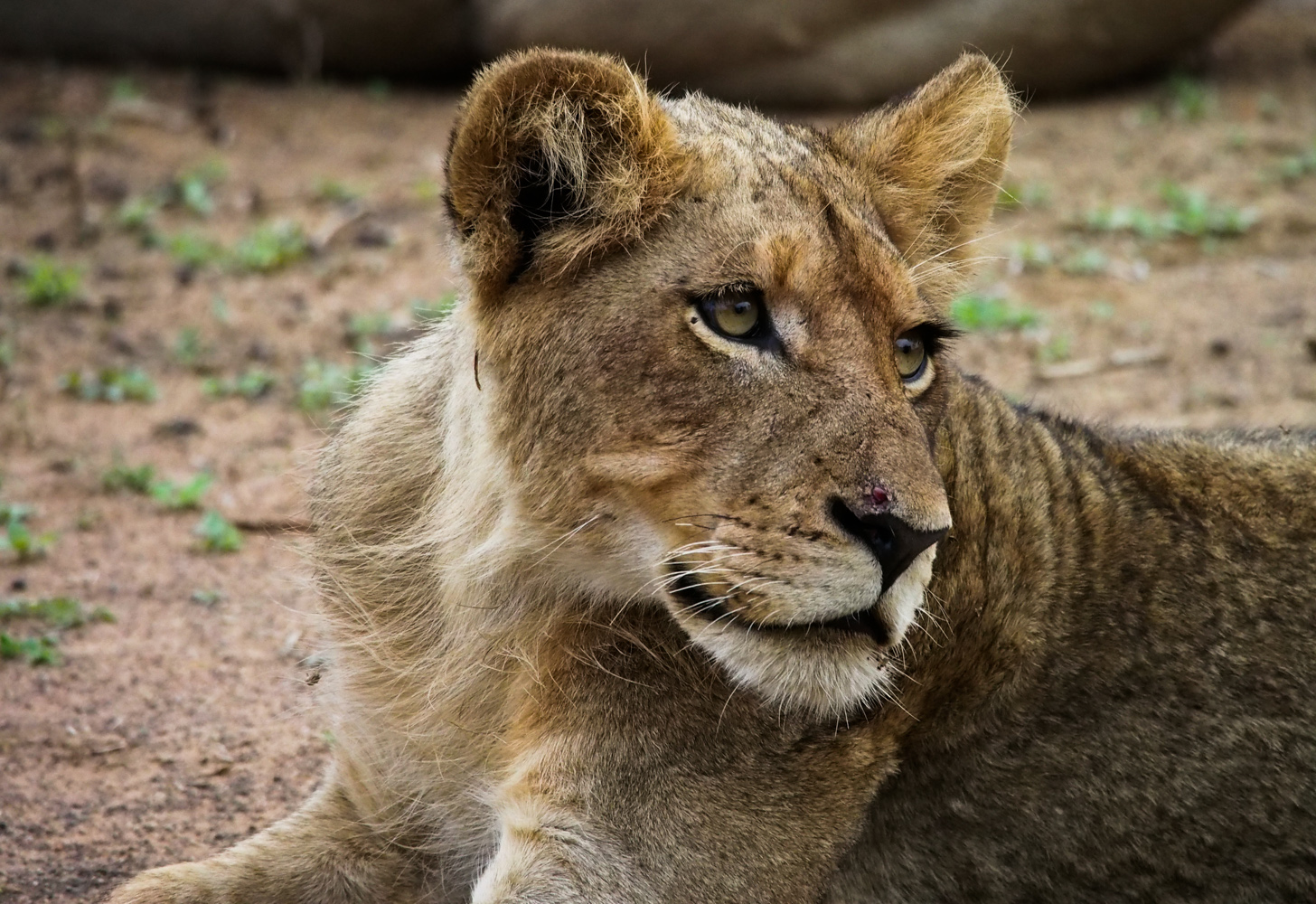 Südafrika_Southafrica_Kruger_Krüger_Nationalpark-6