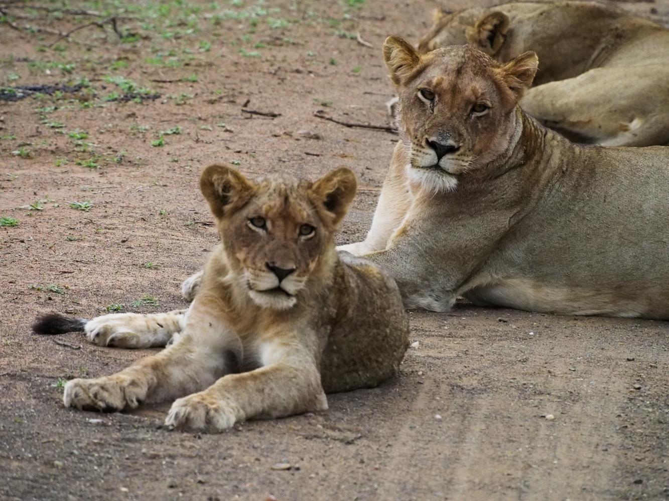 Südafrika_Southafrica_Kruger_Krüger_Nationalpark-7