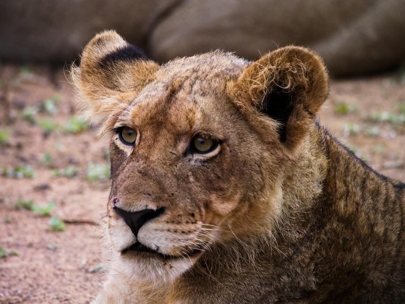 Südafrika_Southafrica_Kruger_Krüger_Nationalpark-8