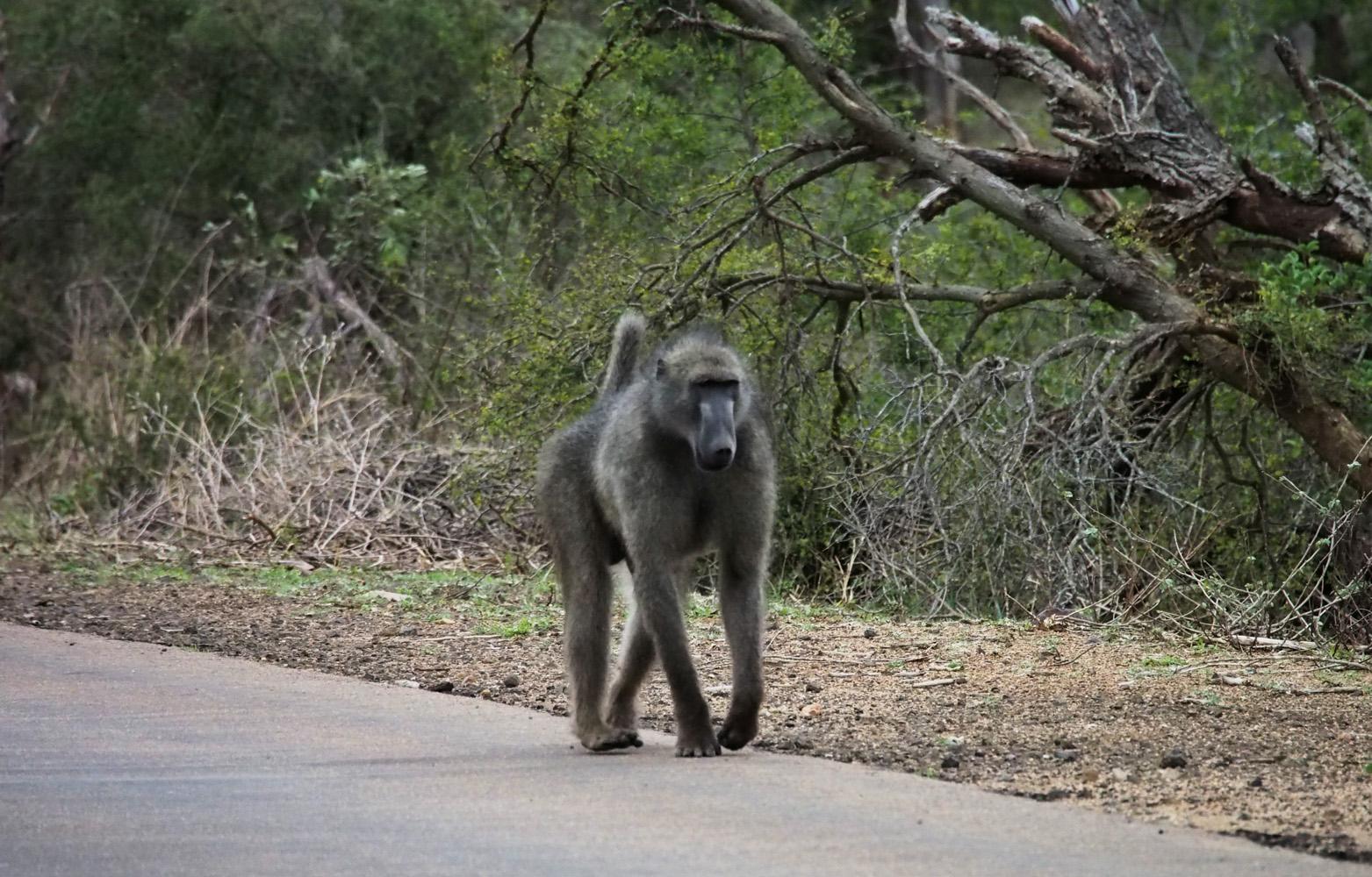 Südafrika_Southafrica_Kruger_Krüger_Nationalpark