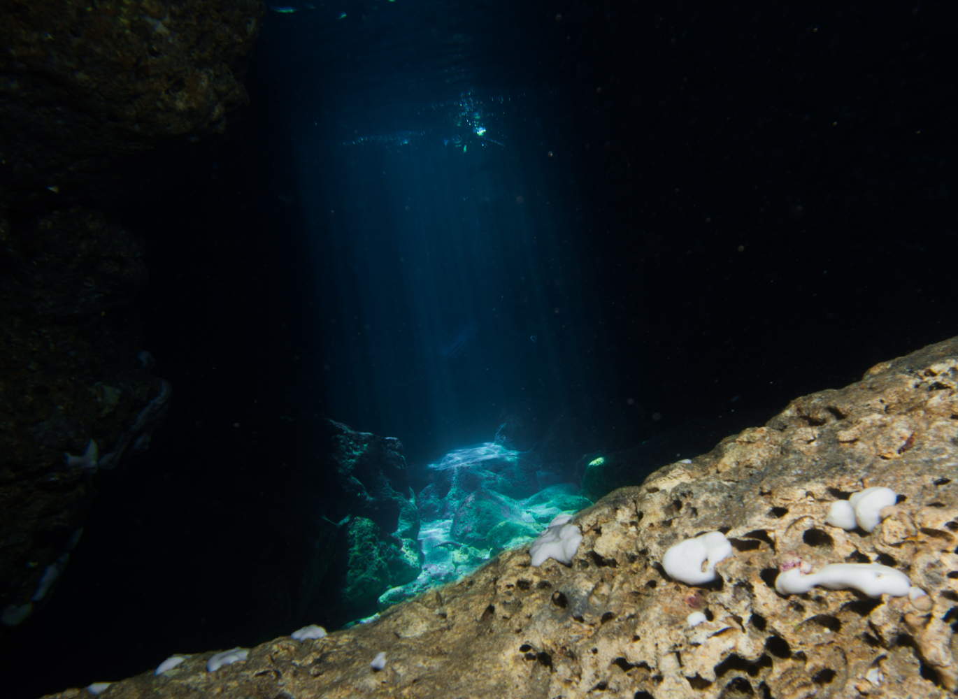 Vrsar_Kroatien_Triton_Diving-2