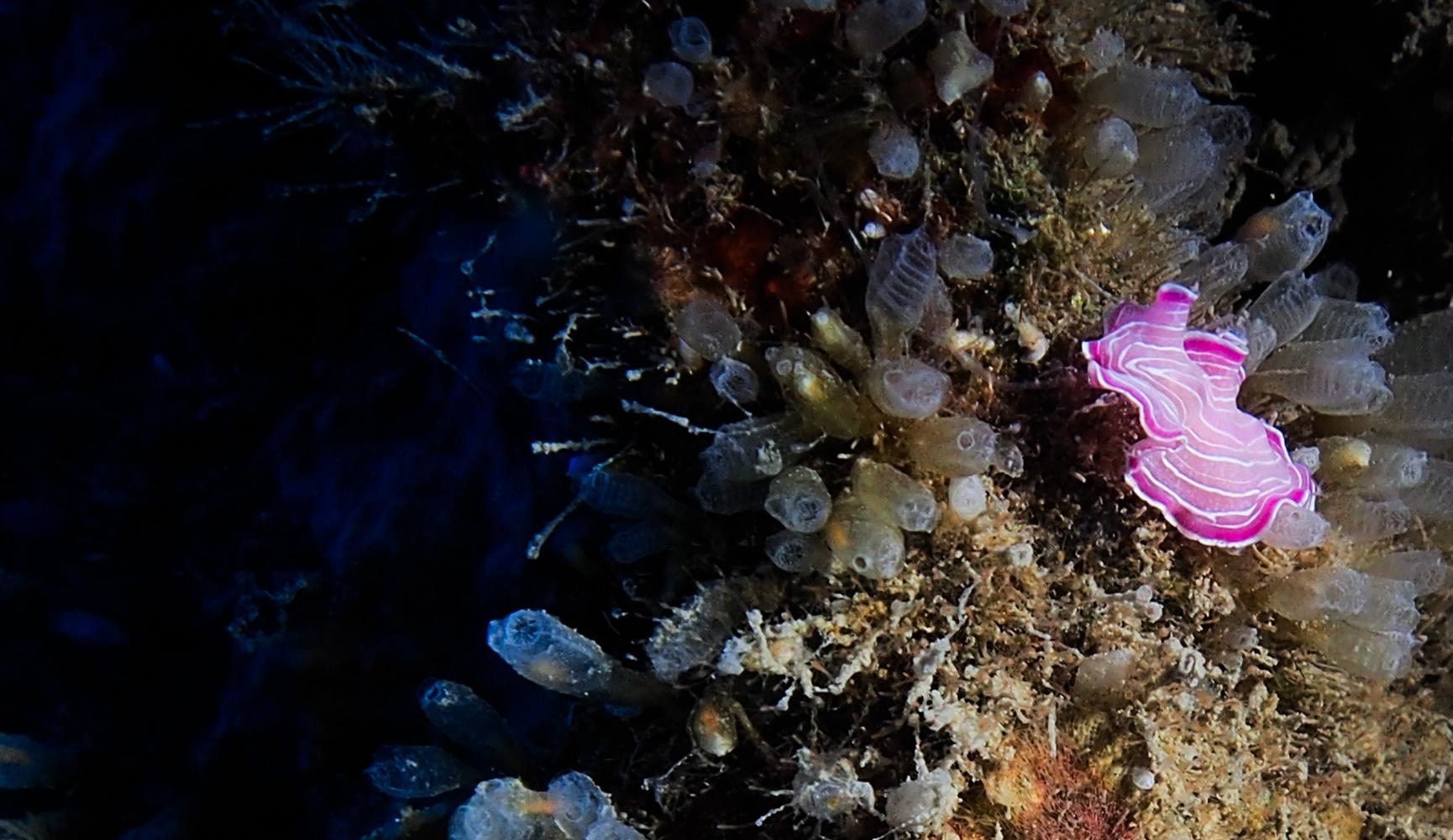 Vrsar_Kroatien_Triton_Diving-27