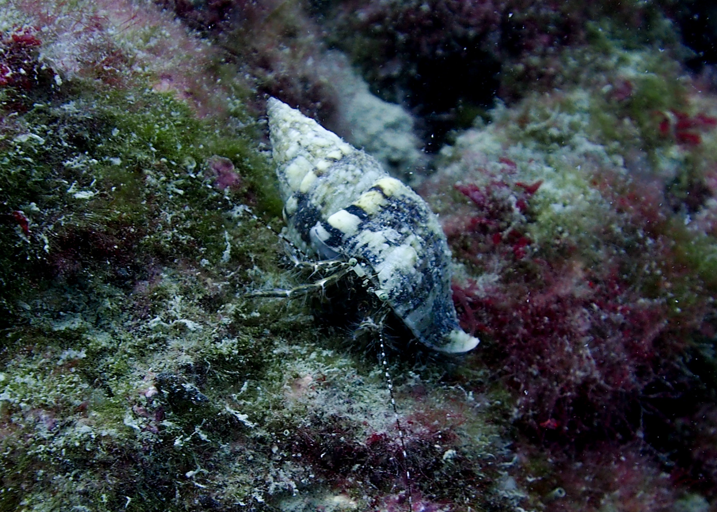 Vrsar_Kroatien_Triton_Diving-33