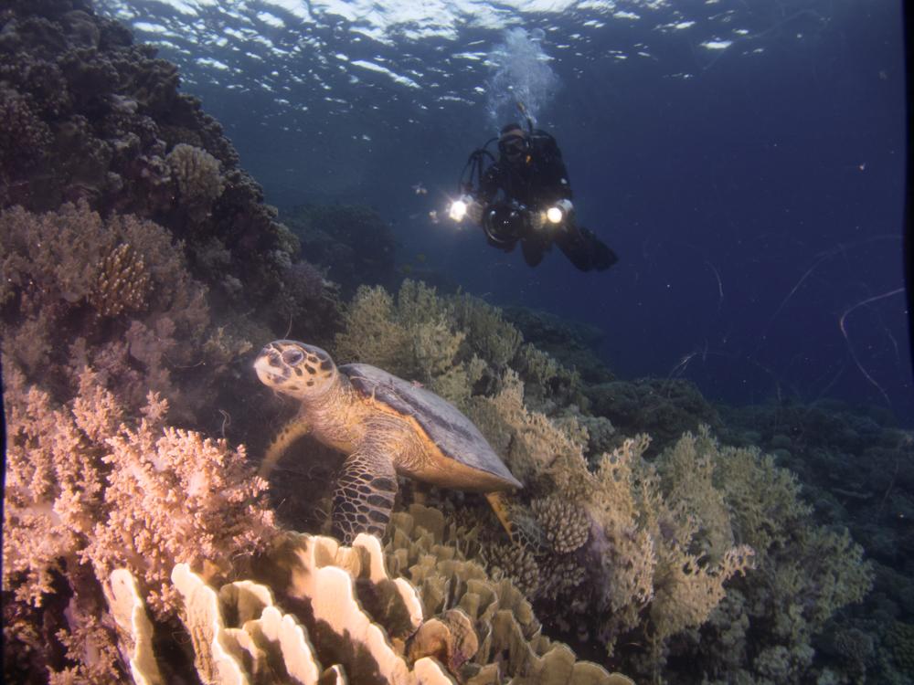 Red Sea Diving Safari Sarah O'Gorman