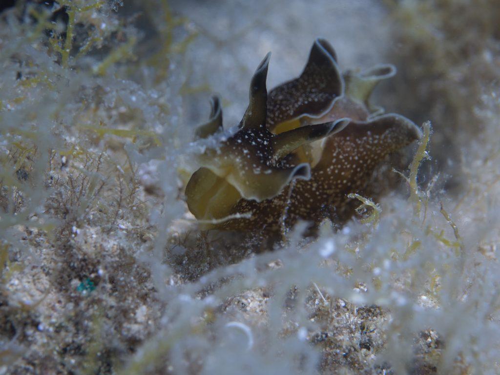 Kroatien_Selce_Mihuric_Diving_Center