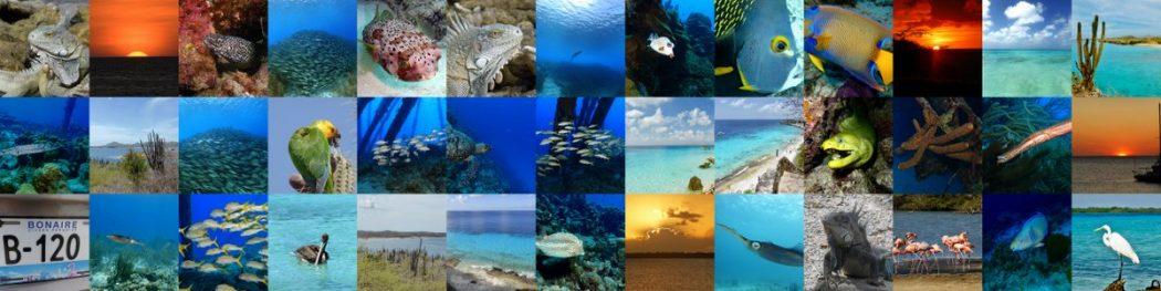 Karibisches Feeling auf Bonaire