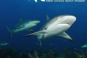 ElasmOcean: Für den Schutz der Meere.
