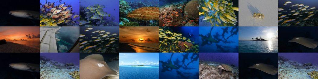 Tauchsafari auf den Malediven