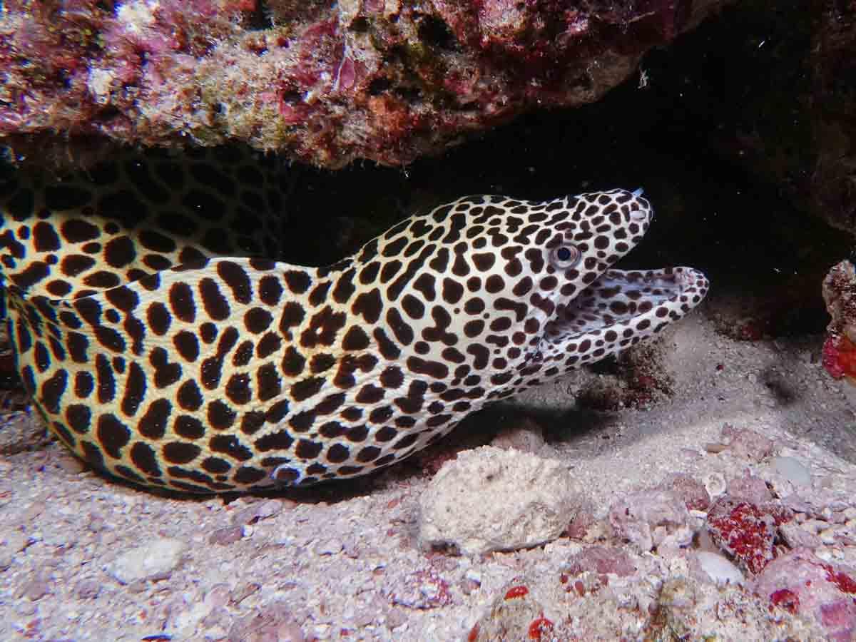 Malediven_Eco_Dive_Pro (13 of 29)