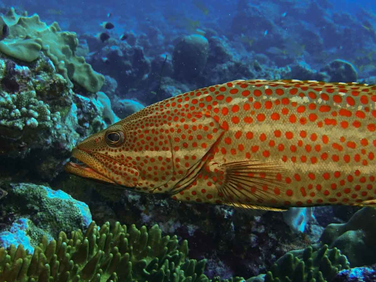 Malediven_Eco_Dive_Pro (25 of 29)