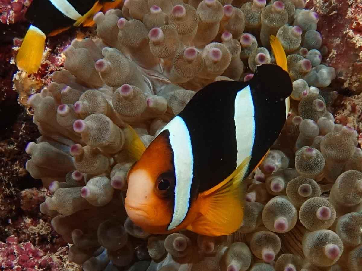 Malediven_Eco_Dive_Pro (27 of 29)