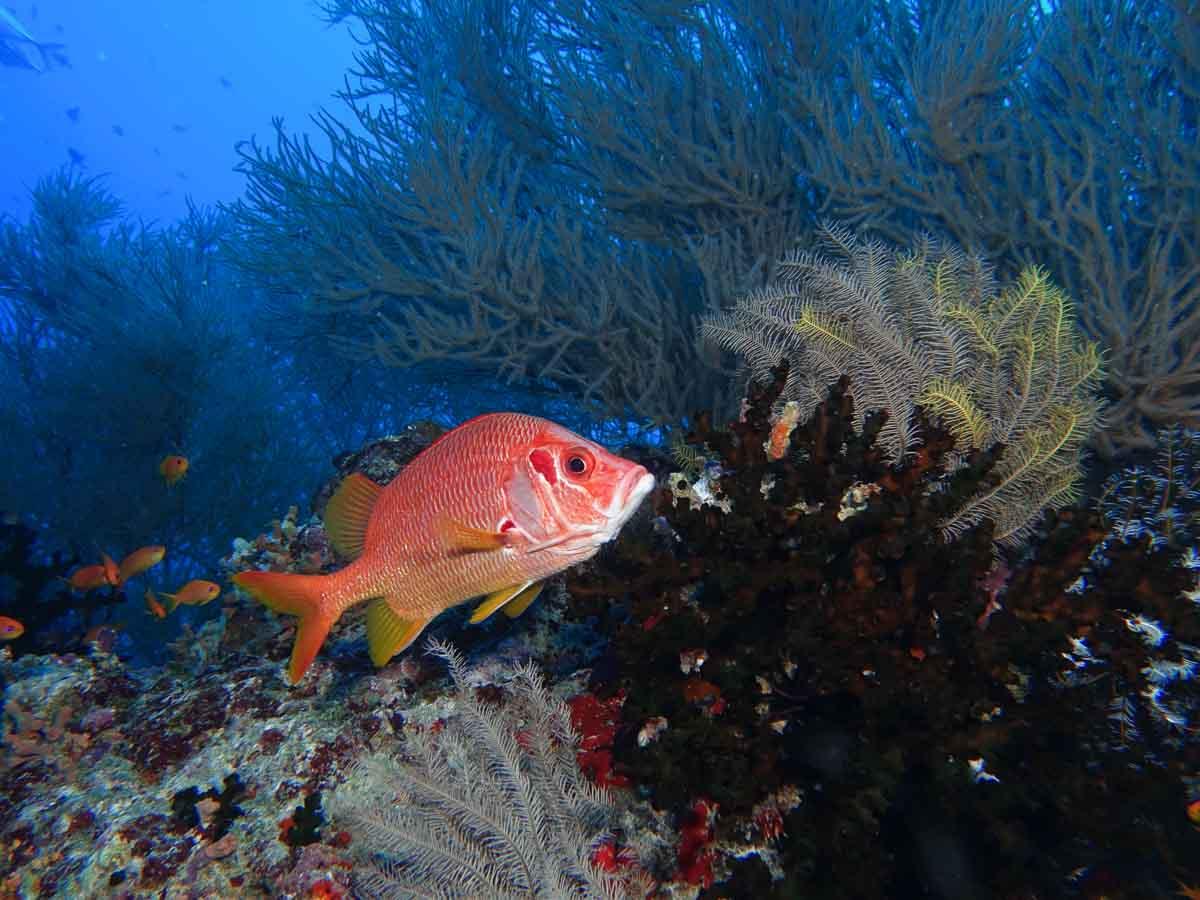 Malediven_Eco_Dive_Pro (28 of 29)