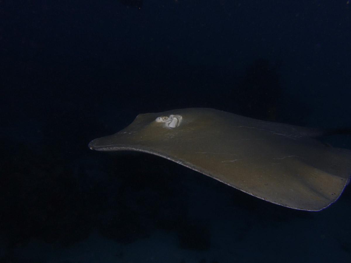 Malediven_Eco_Dive_Pro (6 of 29)