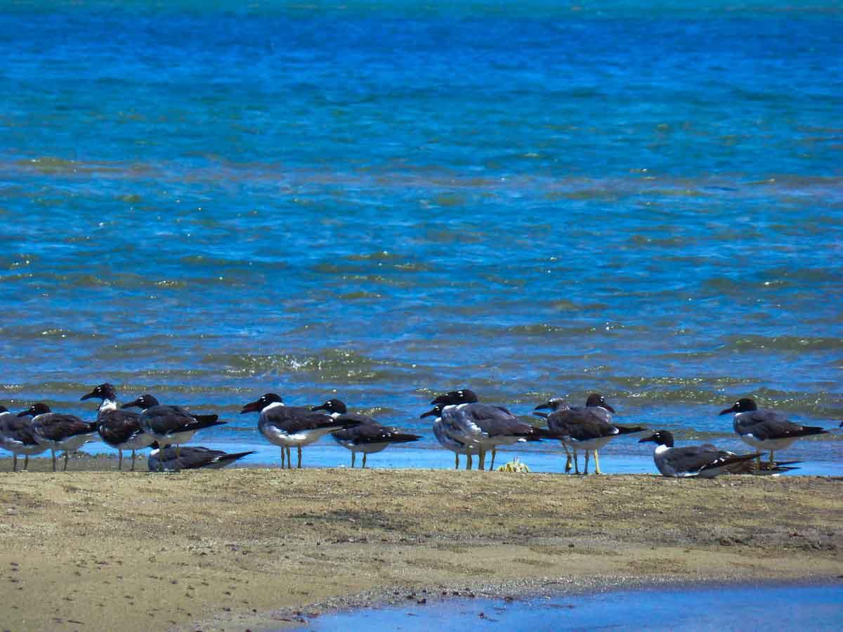 Lahami Bay Rotes Meer Ägypten Marsa Alam (27 of 28)
