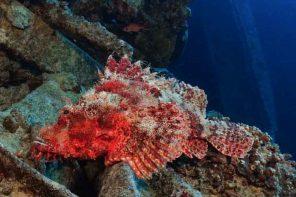 Endlich wieder unter Wasser: Weihnachten in Sharm El Sheikh