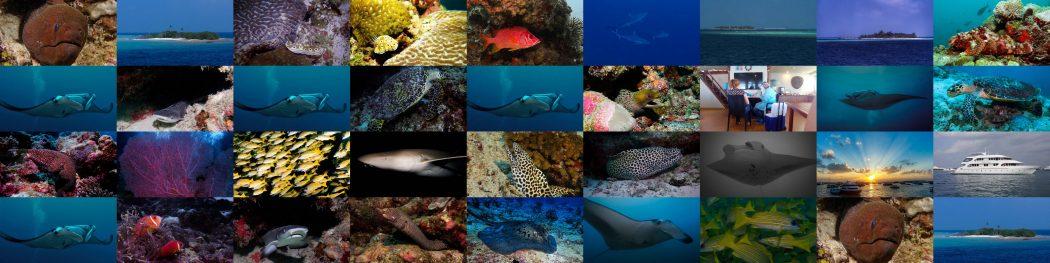 Endlich eine Tauchsafari: Malediven 2021