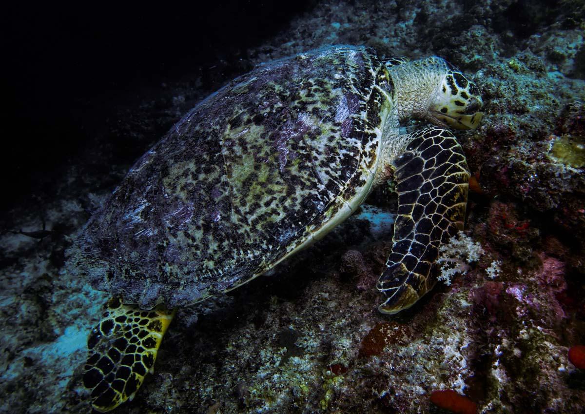 Malediven Carpe Diem Tauchsafari (1 of 1)-12