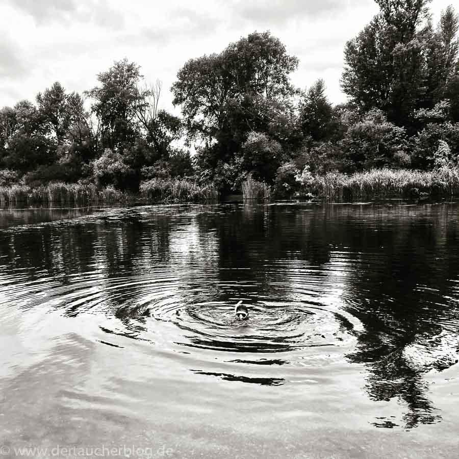 Kaltwasser schwimmen schnorcheln
